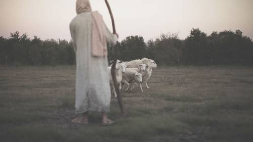 52storiesshepherdpic